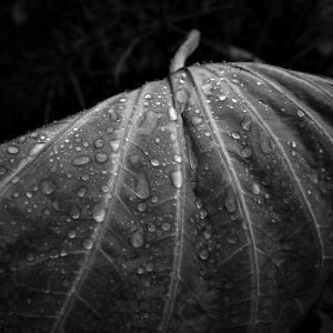 季節を変える雨が降る 20201024
