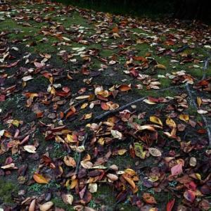 図書館の秋を散歩する