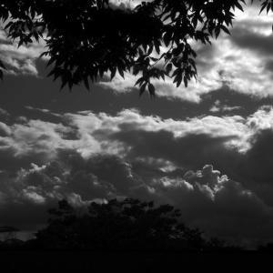 ある秋の一日、光と影 20201103