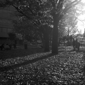 銀杏の公園で 20201118