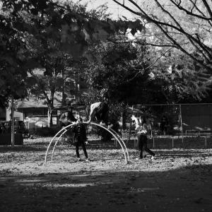 銀杏の公園で「シャッターを押してもらえませんか?」 20201118