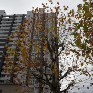 気まぐれな光、気まぐれな雨に、古町界隈で本日オーバーワーク #06 20201121