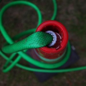 赤と緑が気になった日に、出会った兄弟 20210801