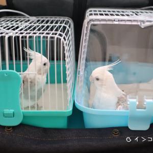 妃ちゃん&フーちゃん、病院へ
