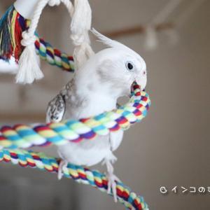 ぐるぐるロープ遊び