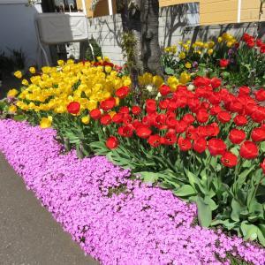 庭は 花盛り