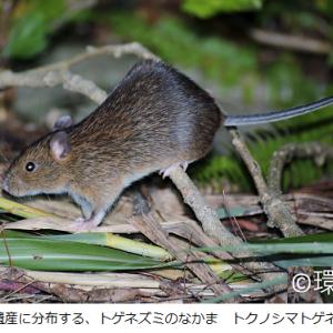 祝!国内5番目、世界自然遺産に登録「奄美大島と徳之島 沖縄本島北部 西表島」