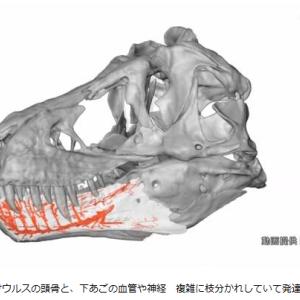 日本で恐竜大発見!世界最小の恐竜 他 8月22日放送「ダーウィンが来た!」