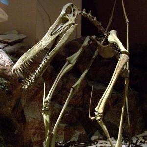 また日本で恐竜化石発見!鹿児島で「薩摩翼竜」近くに首長竜も