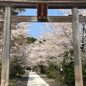 高麗神社の桜並木に魅せられる