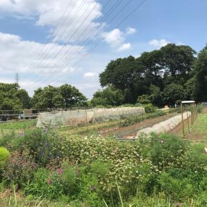 土と戯れる一日 無農薬野菜が近くにある環境を手に入れたい