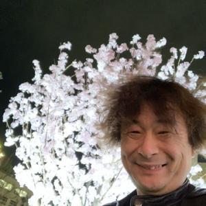 桜を見る会を嫌いになっても、桜を嫌いにならないでください