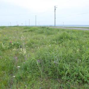 西別川河口と走古丹 2012年8月