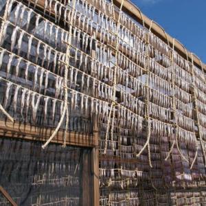 むかわ町のシシャモ 2009年10月