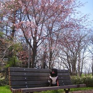 桜撮影10年の記録