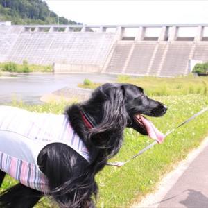 にことダムと川遊び