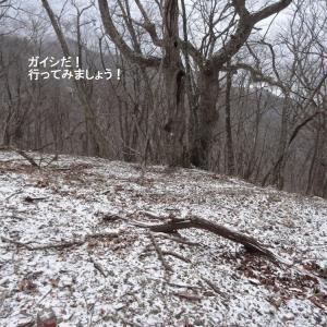 仙人峠遠野側探索 その2(1204)