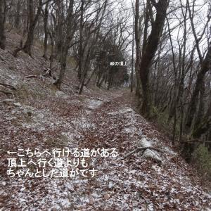 仙人峠遠野側探索 その5(1204)