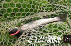 大須賀さんから片品川国際マス釣場さんの釣果報告を頂きました(:з)
