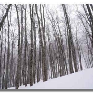 3月のキリン峠の樹氷は?