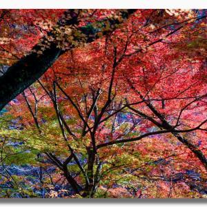 (11-3) 岡山県鏡野町奥津の紅葉