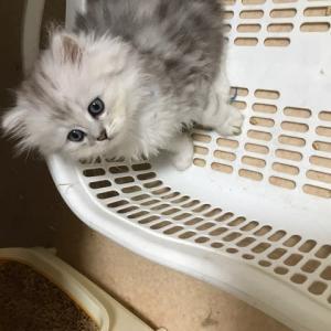 8月29日生まれの子猫ちゃん成長しました👫