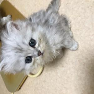 9月24日うまれの子猫ちゃんで〜す🤗