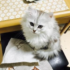 わが家にいる子猫ちゃんで〜す💁、