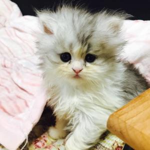 4月生まれの女の子わが家の猫ではないみたい⁉️❓