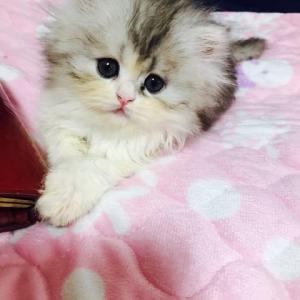 2月〜3月〜4月生まれの子猫ちゃんで〜す😸