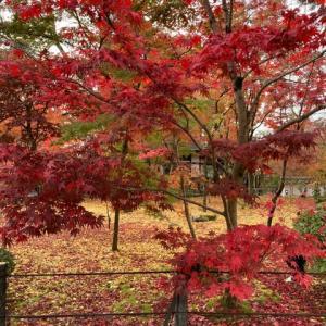今日は京都に紅葉を見に行きました💓
