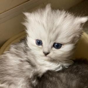 11月29日生まれの子猫ちゃん🐱🐱
