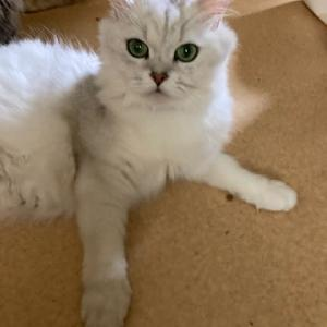 美人な母猫です👰♀️