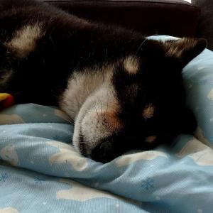 たまきの睡眠