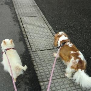 一日ぶりの散歩