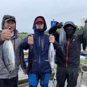 浜名湖沖のカツオ