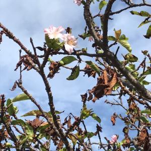 季節外れの花たち・・・・