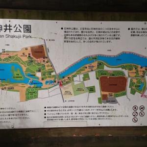 石神井公園(東京 練馬区)散策はとてもオススメ!
