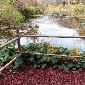 冬の睡蓮 ~ モネの庭から(その388)