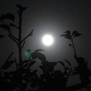 ぼんのような月