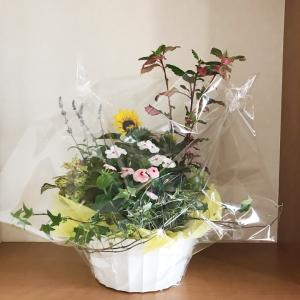 今日は父の日だけど結婚記念日&明日は旦那さんの誕生日♪今年もお祝いのお花「花鉢」