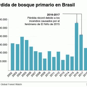 森林破壊、ラテンアメリカ5カ国が上位を占める(6月4日)