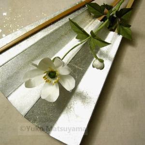 扇面 秋明菊