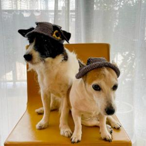 犬の夏帽子