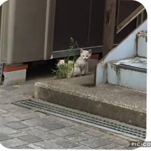 野良猫たちのしあわせ物語2