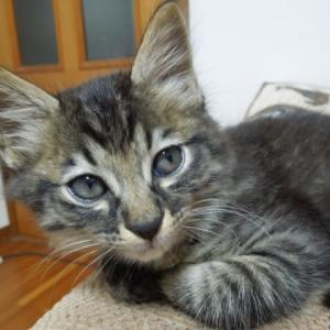 コラージュ刺しゅう ユーカリの葉  子猫を飼い始めました あずき君