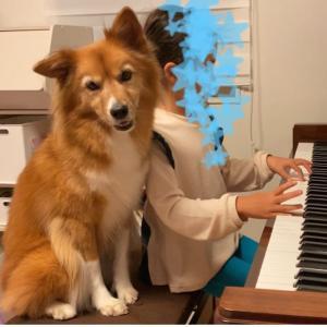 ピアノ練習に付き合う犬