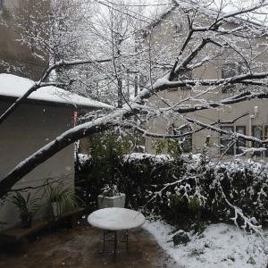 """""""桜隠し""""を思い、エゴの積雪を楽しむ"""