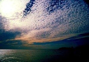秋澄む鰯雲