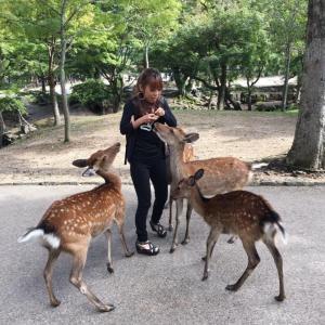 お知らせ 関西サークルキャンペーン&FMはな北田恵美のほほえみラジオ